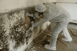 Kansas City Mold Removal, Mold Testing In Kansas City, and Kansas City Mold Remediation Are Kade Cleaning Systems Main Services