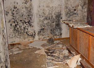 Mold removal Lees Summit Missouri