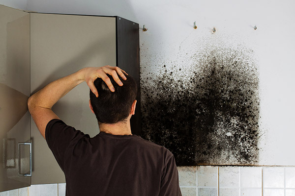 mold removal kansas city, mold damage restoration kansas city, mold damage repair kansas city